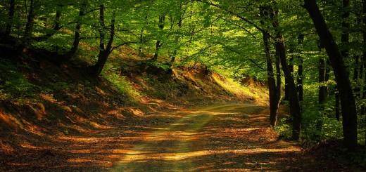 road-1345716_960_720