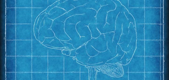 Imagen en perspectiva de un cerebro.